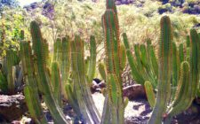 Viera and Clavijo Botanical Garden