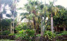 Las Hesperides Tropical Garden