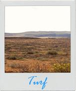 Gran Canaria Local - Turf