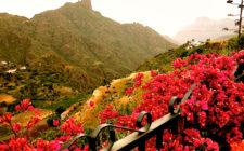 The garden o f Gran Canaria on your doorstep at Casita Nublo, Tejeda