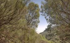 The Barranco de los Cernicalos, a ravishing ravine