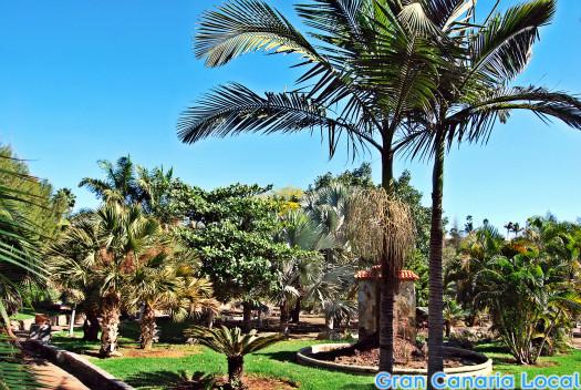 Maspalomas' botanic garden