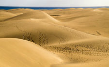 Gran Canaria's record summer season treated visitors with sights of the famous duness
