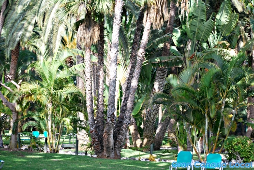 The gardens at Riu Palace Oasis