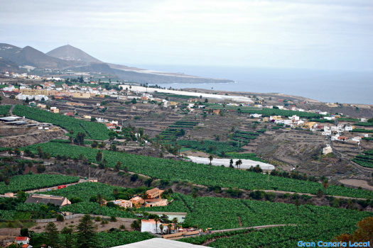 Arucas coastline and plantations