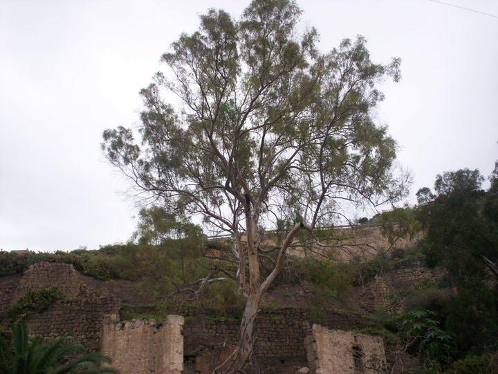 Guiniguada Ravine