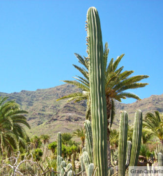 Cacti high at Cactualdea Park