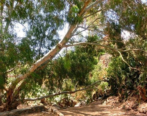Ingenio's Parque Nestor Alamo