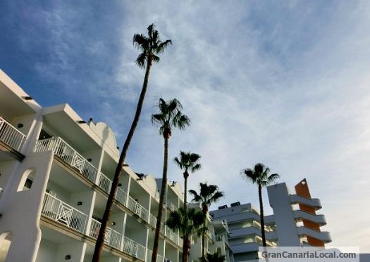 Puerto Rico palms