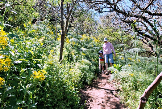 Walking in Gran Canaria's an ideal app for families