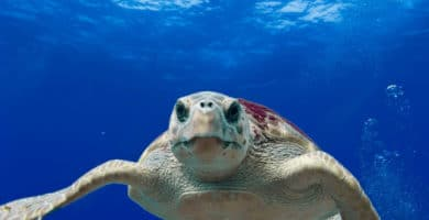 The Canary Islands nurture sea turtles