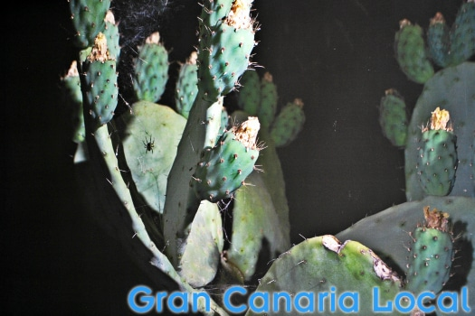 This cactus photo features in Pilar Boullosa's Relatos (in)visibles at the Fundacion Mapfre Guanarteme.